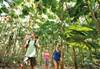 Voluntouring_Daintree
